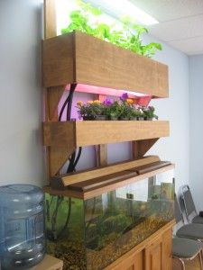 Indoor plants:  elegant looking aquaponics, a set up in a optho office!