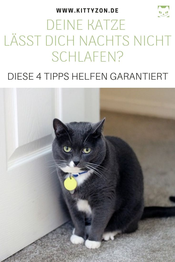 Katzenpsychologie Tipps