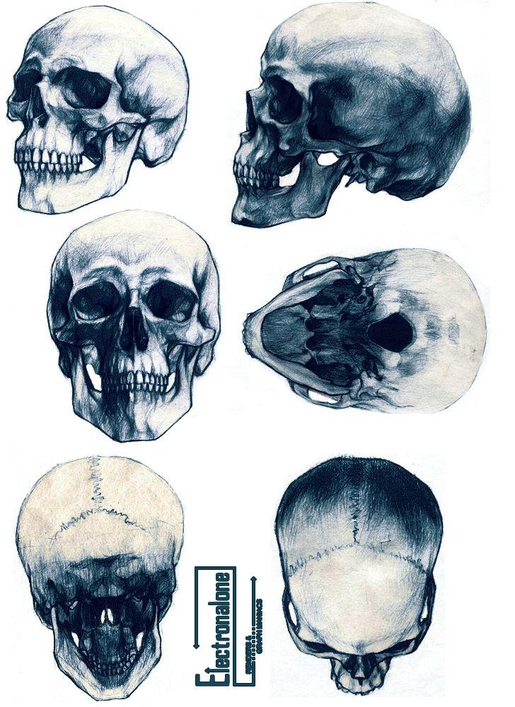Renders cranes humain skull squelette differents angles dessin monochrome                                                                                                                                                                                 Plus