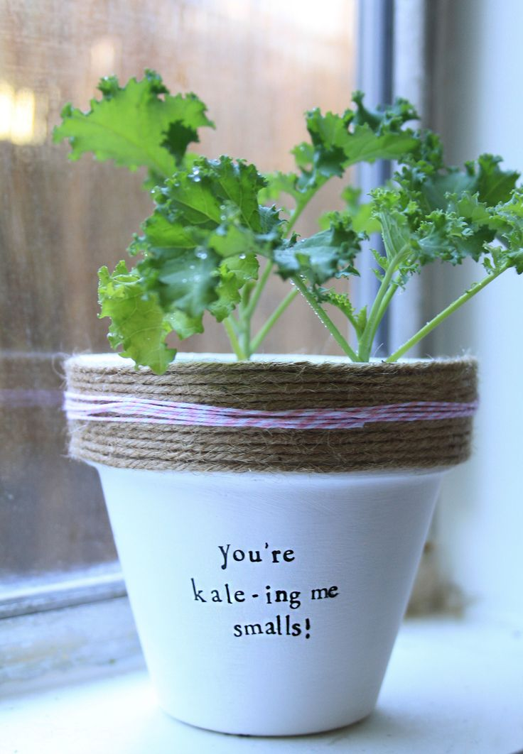 Cool Idea For Indoor Potted Plants   Funny Kale Pun!