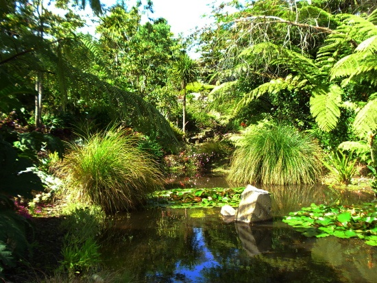Queendom Gardens (back of Silverdale)