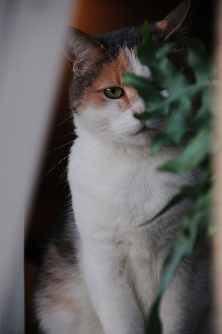 My home - our cat Isa in a bedroomwindow