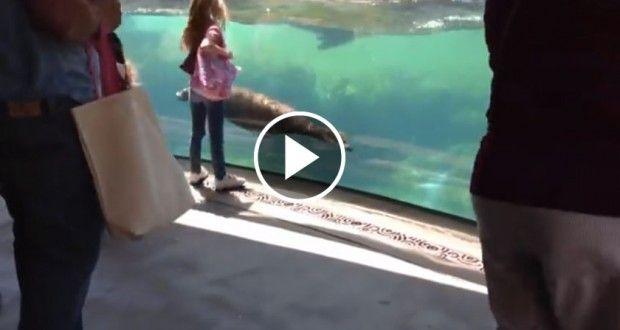 A reação de um leão-marinho à queda de uma criança que brincava à sua frente… LINDO!   Alta Cena