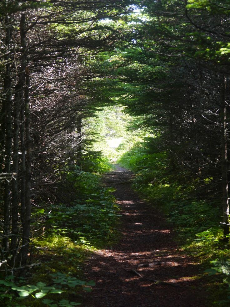 Sense and Simplicity: Old winter mail trail through the forest near Green Point, Gros Morne National Park used for delivering the mail by dog sled until the road went through in 1952.