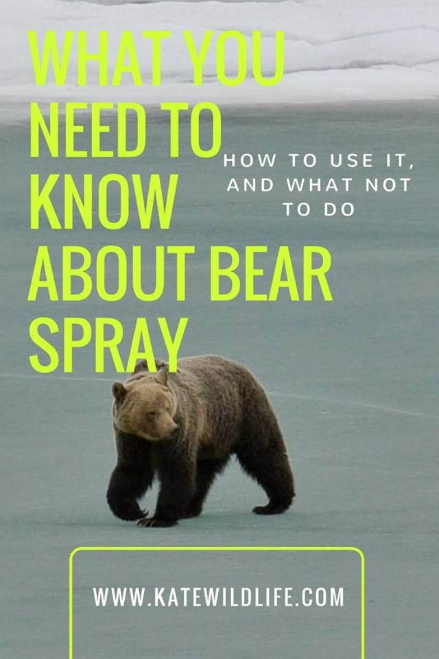 It's bear safety month! Also enter your email to get your free bear safety cheat sheet- with checklists and step by step instructions.