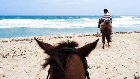 På stranden gäller det att hålla hästarna i korta tyglar –några av dem tycker annats om att slänga sig i havet och bada.