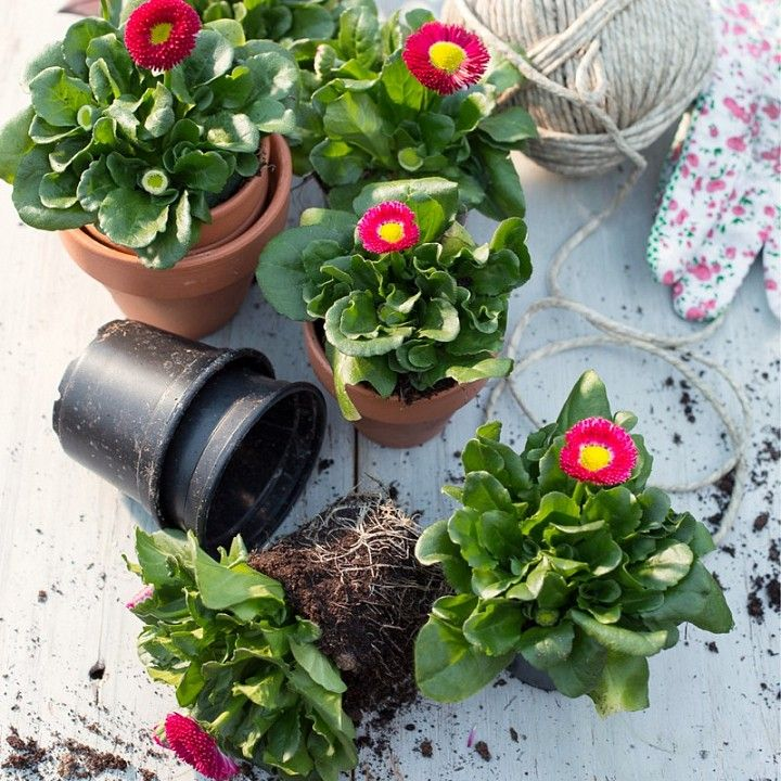 75 best images about intratuin tuin en terras on pinterest geraniums pot plants and barbecue - Terras tuin decoratie ...