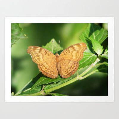 Butterfly 2 Art Print by Sheridan van Aken - $20.80