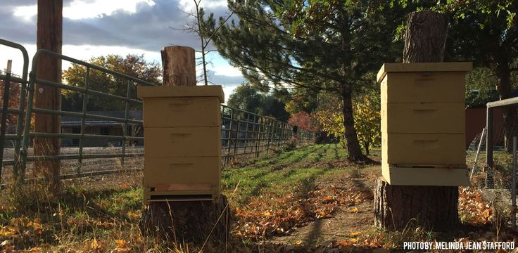 Dead Beehive and what the cause could be. #bees #beehive #norulesinbeekeeping