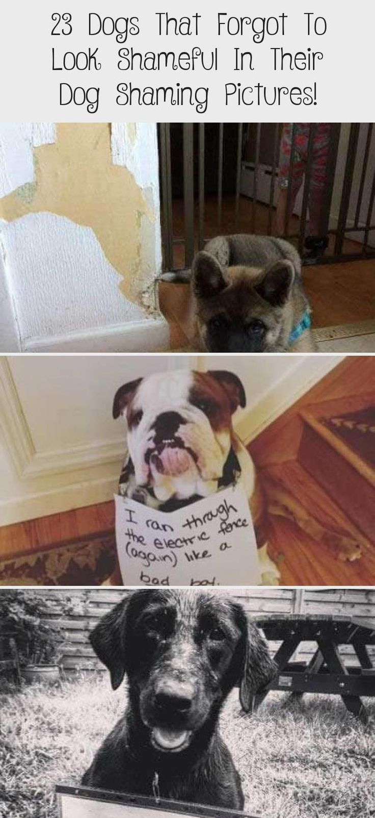 23 Dogs That Forgot To Look Shameful In Their Dog Shaming Pictures
