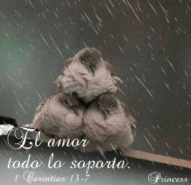 1 Corintios 13:4-8 El amor es sufrido, es benigno; el amor no tiene envidia, el…