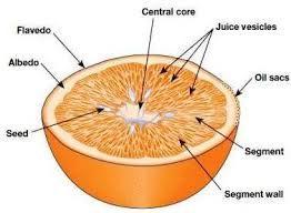Картинки по запросу альбедо цитрусовых