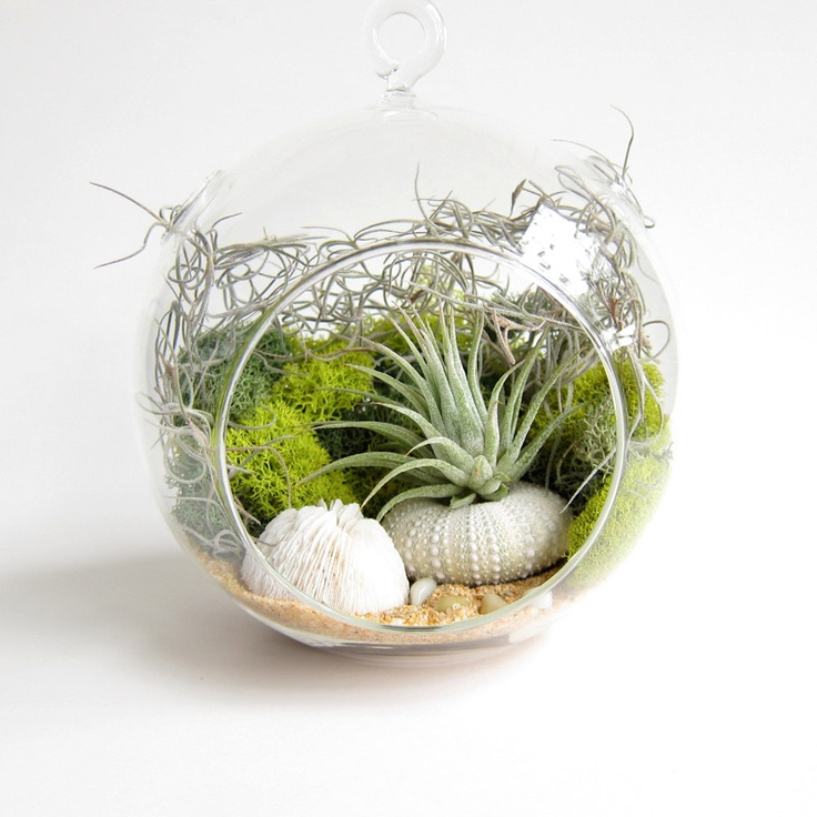 Beach Terrarium DIY With Air Plant Ombre