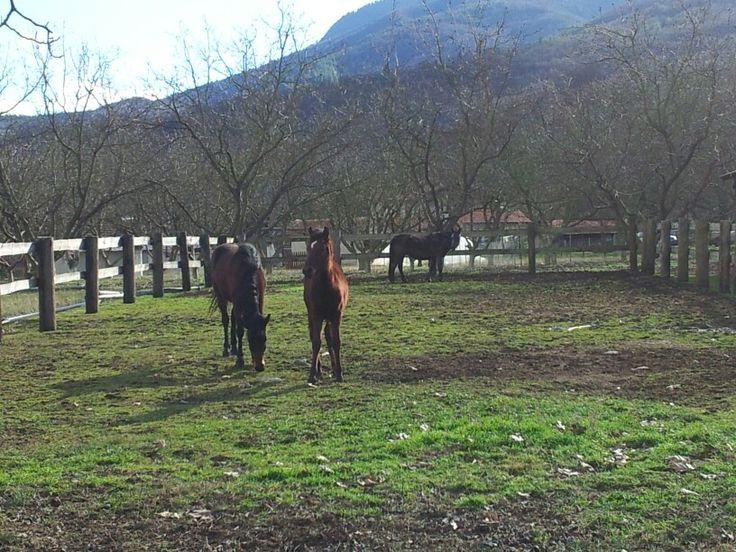 The farm @ Nisia