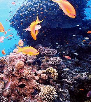 Underwater Photography Eilat, Israel