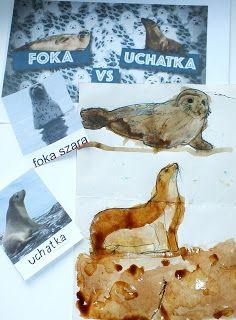 Kolejnym zwierzakiem cudakiem jakiego chciałyśmy wam pokazać jest Foka .  Foka nie jest sam a jak to si ę  stało że nasza foka nie jest s...