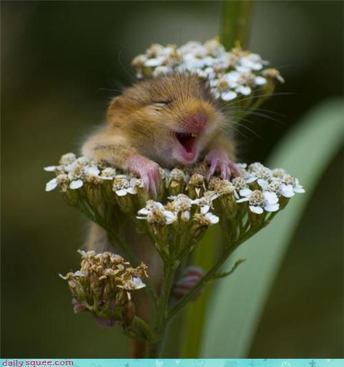 Cutest rodent ever