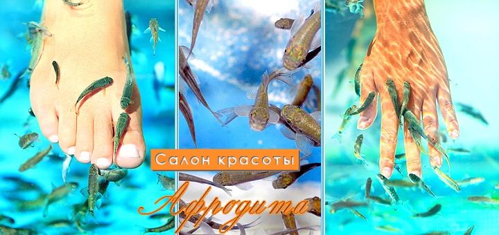 Расслабляющий массаж рук и ног рыбками Garra Rufa, точечный массаж рук и парафинотерапия от салона «Афродита»!  http://pokupon.ua/ru/kiev/campaigns/8671