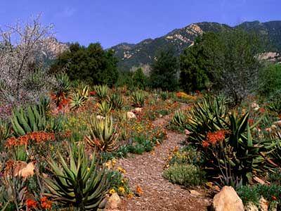 52 best Plant Combinations images on Pinterest Desert gardening
