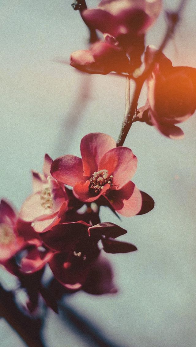 Flower Nostalgia Tree Spring Blossom Nature Flare #iPhone #5s #wallpaper
