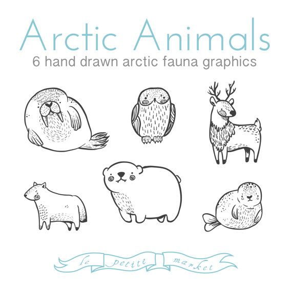 Legen Sie hübsch Doodly handgezeichnete arktische Tiere Clipart Illustrationen, Walross Siegel Eisbär Rentier Schnee-Eule Polarfuchs, digitaler Download