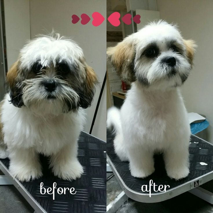 Cutie Mailo (5 months) came for his first real haircut