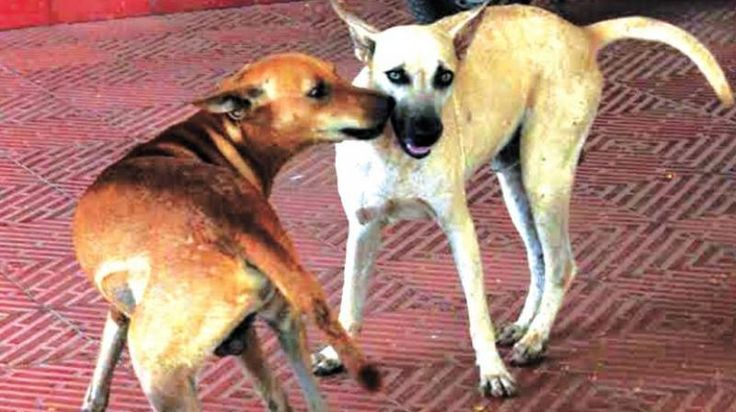 World Rabies Day Negligence behind rabies deaths say health experts - Deccan Chronicle #757Live
