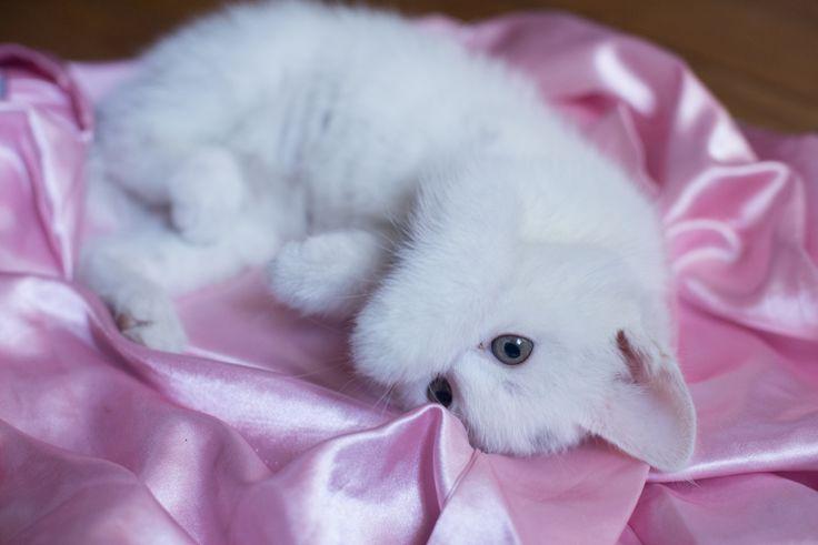 Cat portrait tenderness - Cat portrait tenderness