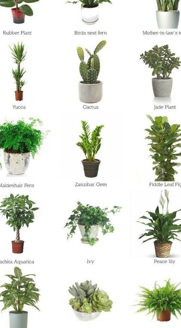 Trailing Indoor Plants Australia