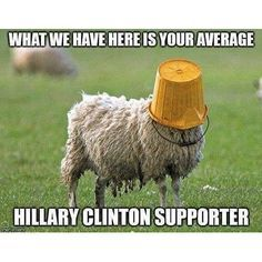 Your average Hillary Clinton supporter