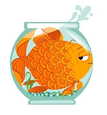 111 Best Fish Images On Pinterest