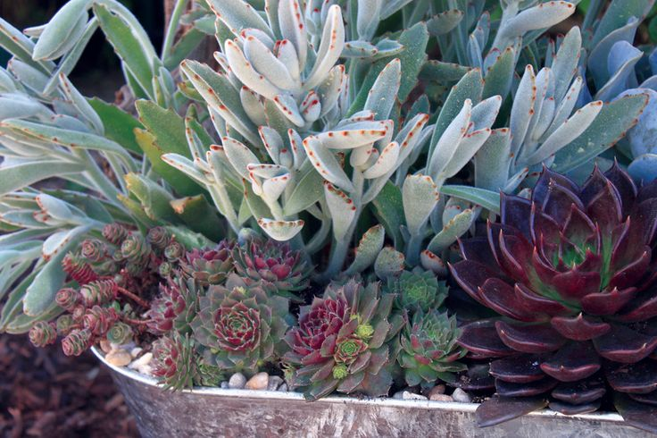 17 Best Images About Interior Planter Succulents On