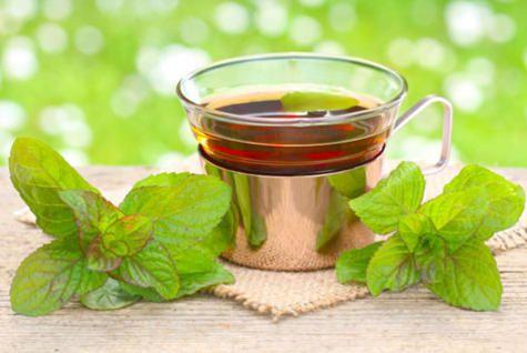 How to Grow Your Own Tea http://www.rodalenews.com/grow-your-own-tea?cm_mmc=Facebook-_-Rodale-_-Food-_-HappyNationalIcedTeaDayGrowYourOwn