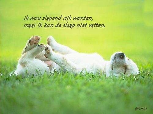 SPREUKEN EN WIJZE GEZEGDEN. Hyve - hyves.nl