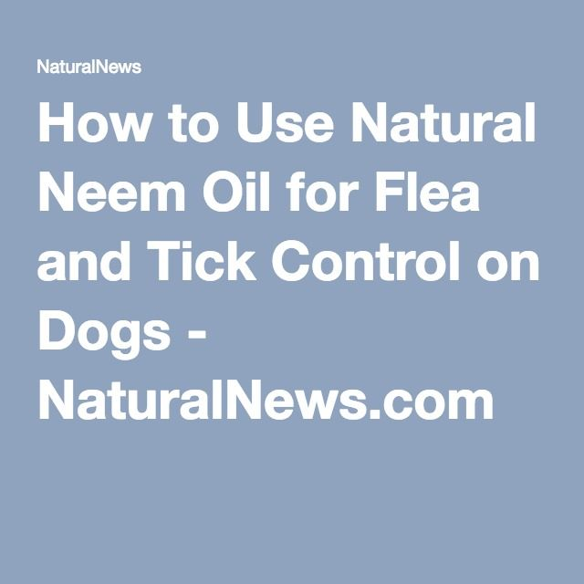How to Use Natural Neem Oil for Flea and Tick Control on Dogs - NaturalNews.com
