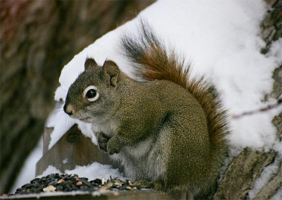 Fun Facts About Squirrels | LiveScience