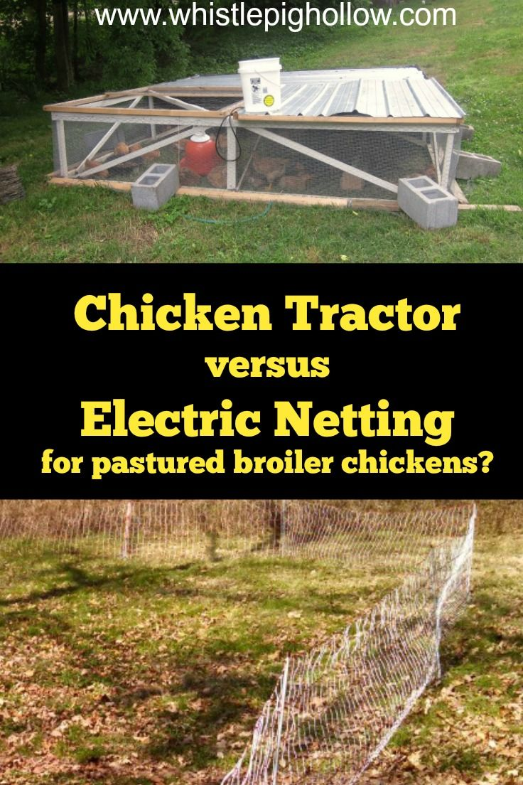 Pastured Poultry: Chicken Tractor versus Electric Poultry Netting