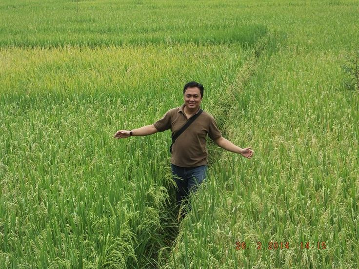 Rice field journey