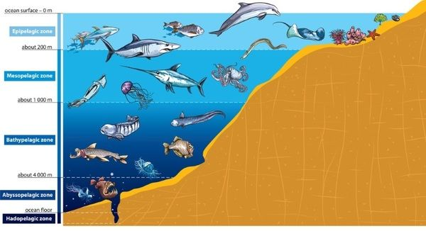 Ocean Zones Free Online Lesson - Introduce students to oceans zone with this interactive lesson.