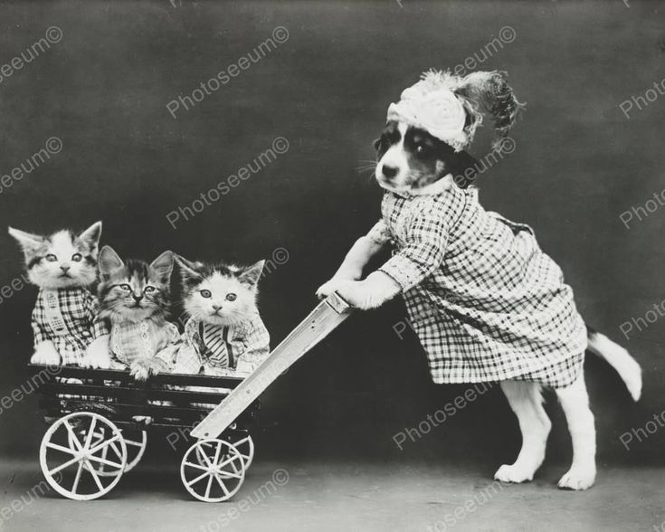 Original vintage old photos reproduced into contemporary prints. All photographs are chemically processed in photo labs and in great condition. Dog Pushing Cat Stroller 8x10 Reprint Of Old Photo Dog P                                                                                                                                                                                 More