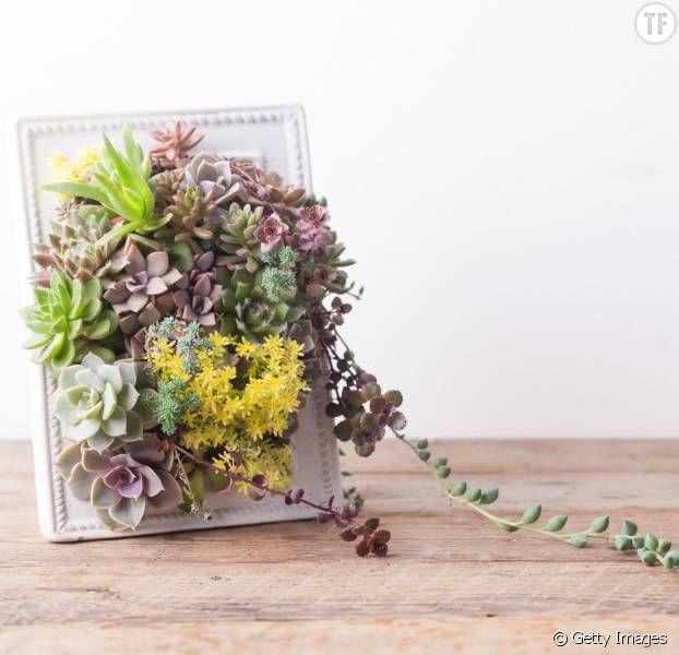 les 32 meilleures images propos de tableau v g tal sur pinterest cache pots pour plantes. Black Bedroom Furniture Sets. Home Design Ideas