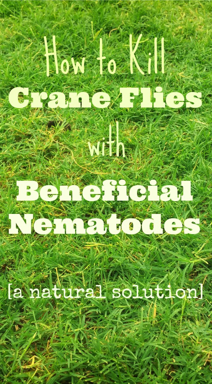 9 best garden pests images on pinterest garden pests for Beneficial nematodes for termites
