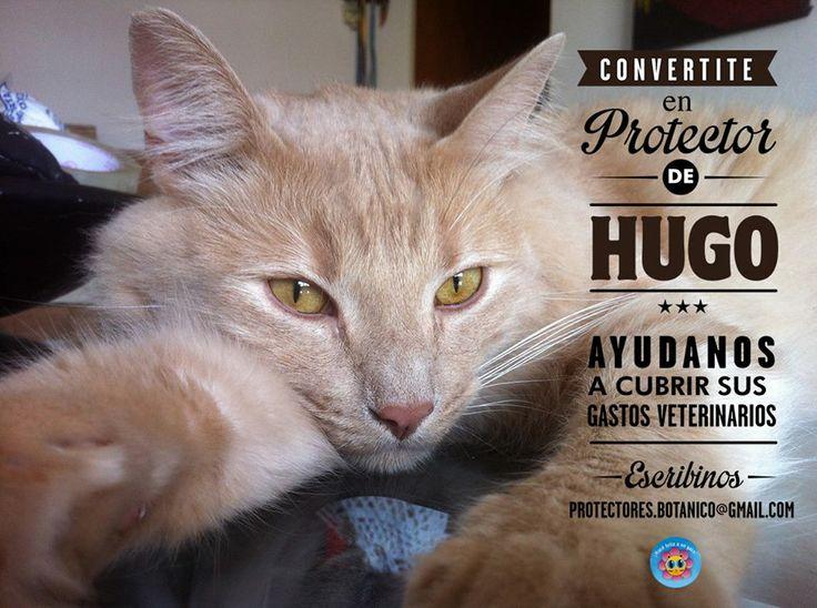 ¡Convertite en PROTECTOR de HUGO! Hugo tuvo una obstrucción urinaria que ha derivado ahora en una infección. Ya lo estamos tratando pero ha tenido muchos gastos veterinarios. Como es un gato copadísimo, peludo y re lindo, sabemos que le va a poner garra para salir adelante y encontrar un hogar definitivo. Mientras tanto... ¡necesita protectores!