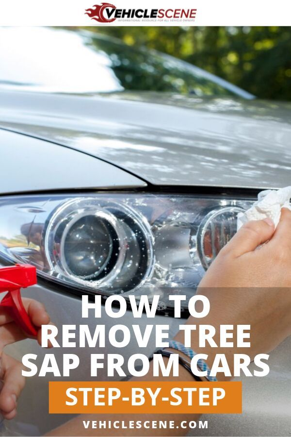How To Remove Tree Sap From Your Car Prevent It From Coming Back