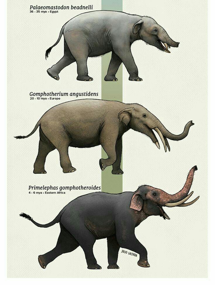 Image of: Glad Prehistoric Wildlife Prehistoric Creatures Extinct Animals Stone Age Animals Fauna Cryptozoology Pinterest Pin By Theivendram Paraneetharan On Ancient Animals Pinterest