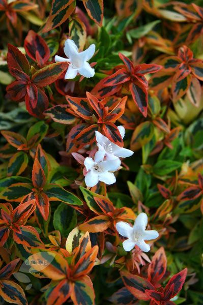 Front shrub border filler to top left corner?A colourful low-grower