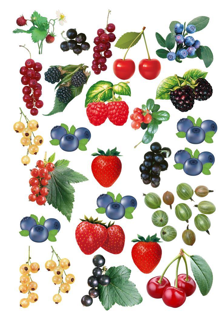 Ягоды и фрукты картинка для детей