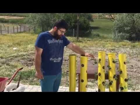 Solucan Gübresi ile Çilek Ekimi (Dikey Tarım) - YouTube