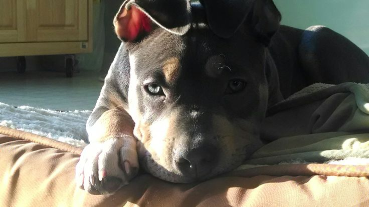 Amanda from Downingtown has submitted 3 photos of her dog, Rebel (isn't he cute!) for Pet of the Week! That's $1 more for Chester County Pet Food Pantry. Keep submitting these great pics. Every photo means another $1.00 donated to CCPFP. Email pics along with your name, your town and your pet's name to Media@bobwagner.com. If your pet is chosen as Pet of the Week, we will donate $5.00 in your pets name. Please Share