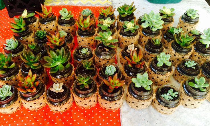Recycled Baby Food Jar Succulents : re-use baby food jars to create succulent party favors. Great for baby's 1st birthday guest favors. Keep for beautiful momentos or can be used for gifts at any occasion: garden parties, craft get togethers, baby shower, wedding, rehearsals, luncheons, etc.